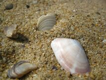 close-up-of-broken-sea-shells-in-the-sand Stock Image