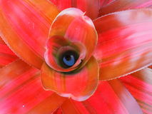 Close up of Bromeliad. Stock Photo