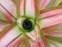 Close up of Bromeliad. Stock Image