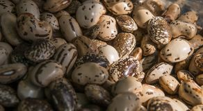 Close up brown beans background and as a texture. Healthy vegetarian dietary food rich in microelements. Healthy royalty free stock photo