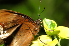 close up brown butterfly Stock Photo