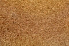 close up brown dog skin for texture and pattern