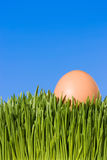 Close Up Of A Brown Egg In Green Grass. A Detailed Close Up Of A Brown Egg, Nestled In the Green Grass with Blue Sky Copy Space ~ Clipping Path Stock Photo