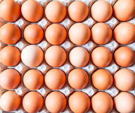 Close up of Brown Eggs Royalty Free Stock Photos