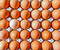 Close up of Brown Eggs Stock Photo
