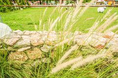 Brown flower grass in green pasture land Royalty Free Stock Photos