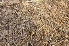 Close up of brown hay Stock Photo
