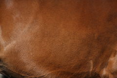 Close up of brown horse coat Stock Image