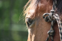 Close up of brown horse eye Royalty Free Stock Images