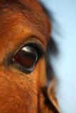 Close up of brown horse eye Stock Photos