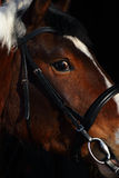 Close up of brown horse eye Royalty Free Stock Photo