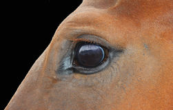 Close up of a brown horse eyes Stock Image