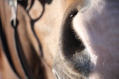 Close up of brown horse head Stock Photos