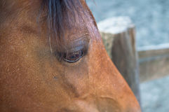 Close up of a brown horse's eye.  Royalty Free Stock Images