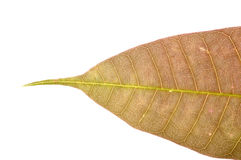Close up of brown leaf texture Royalty Free Stock Photos