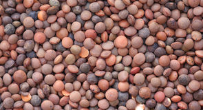 Close up of brown lentils. A close up of brown lentils filling the background Royalty Free Stock Image
