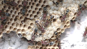 Close up of brown paper wasp stock footage
