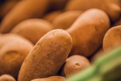 Close up of brown potatoes in market royalty free stock photography