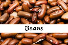 Close up brown red beans background. Brown red beans seeds with some white beans. Text beans Royalty Free Stock Photo