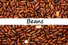Close up brown red beans background. Brown red beans seeds with some white beans. Text beans Stock Photo