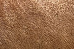 Close up of brown soft wool texture background. Natural fluffy fur of sheep, cow or calf. Warmth and comfort. Close up of brown soft wool texture background Stock Photo