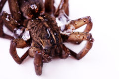 A Close Up Of A Brown Spider's Head Stock Images