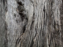 Close-up of brown tree bark with long crackly lines Royalty Free Stock Images