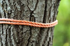 Close up of brown tree with rope. Whole background Stock Photography