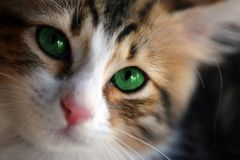 Cat with green eyes looking at the camera lens stock photos
