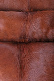 Close up Brown and white cowhide Stock Photos