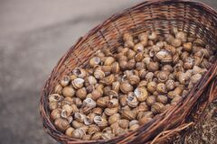 Close up. A brown wicker basket filled with empty snail shells