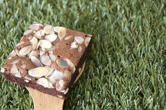 Close up brownie on grass Royalty Free Stock Image