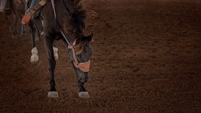 Bucking Horse At A Rodeo. Close up of a bucking horse being ridden by a cowboy at a country rodeo Stock Image