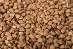 Close up of buckwheat groats Royalty Free Stock Images