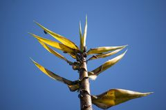 Bug and Yellow Bamboo tree Stock Image
