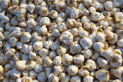 Close up of bulbs of garlic on market stand Stock Photos