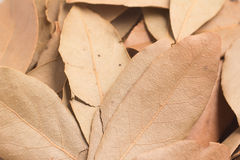 Close-up on a Bulk Bay Leaves Stock Photography