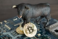 Close Up Bull With Bitcoin Cryptocurrency On Computer Motherboard. Bull Market Wall Street Financial Concept. Selective Focus. stock photography