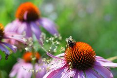 Summer flowers and bumblebee stock image