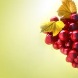 Close-up of a bunch of grapes Royalty Free Stock Photography