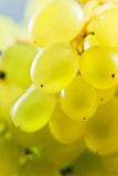 Close-up of a bunch of grapes Stock Photography