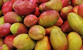 Close up a bunch of mangoes on street market. New harvest fresh mango organic produce agriculture in the summer for sale royalty free stock photography
