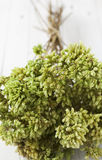 Close up of a bunch of oregano Royalty Free Stock Images