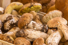 Close up bunch of Porcini mushrooms at the market Stock Images