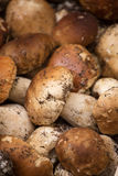 Close up bunch of Porcini mushrooms at the market Royalty Free Stock Photography