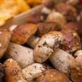 Close up bunch of Porcini mushrooms at the market Stock Image