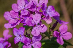 Purple Flowers Close UP. A close up of a bunch of purple flowers Royalty Free Stock Photo