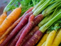 Close up of bunch of rainbow carrots royalty free stock image