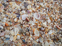Close up of a bunch of shells Stock Photos