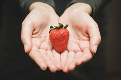 A close of two hands offering a heartshaped strawberry. The background is dark royalty free stock images